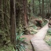 Rainforest Trail im Pacific Rim National Park, Kanada