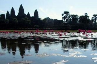 Angkor Wat Reflection mit Seerosen