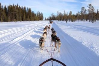 Unterwegs mit dem Hundeschlitten