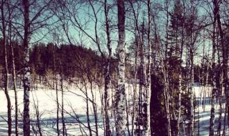 Wälder und Seen  Lappland