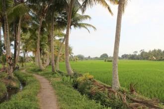 Weg durch die Reisfelder Ubud