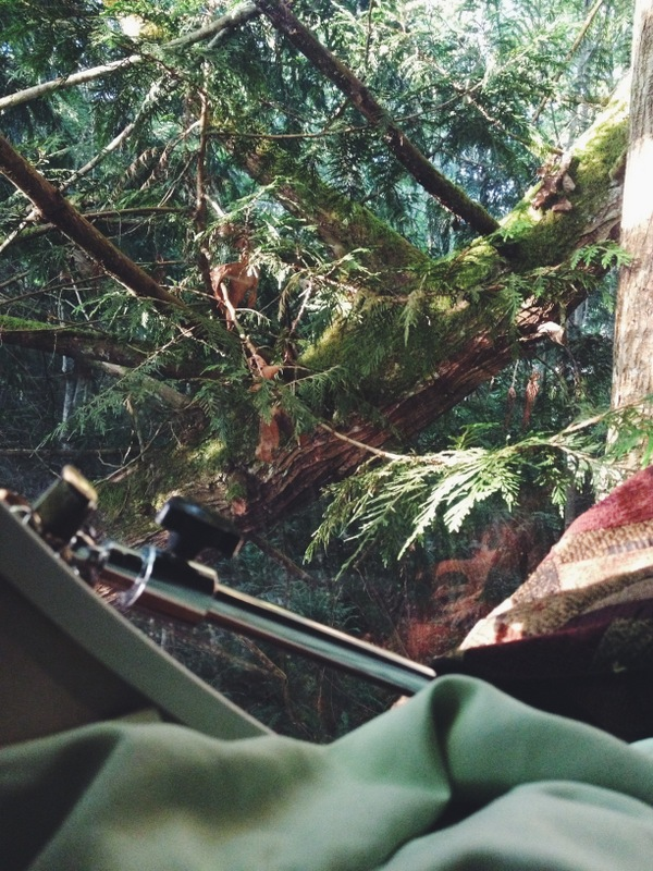 Free Spirit Spheres Baumhaus Blick in den Wald