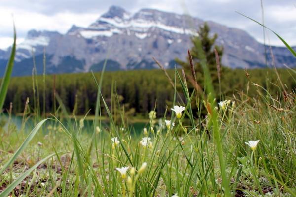 Johnson Lake Banff Rockies