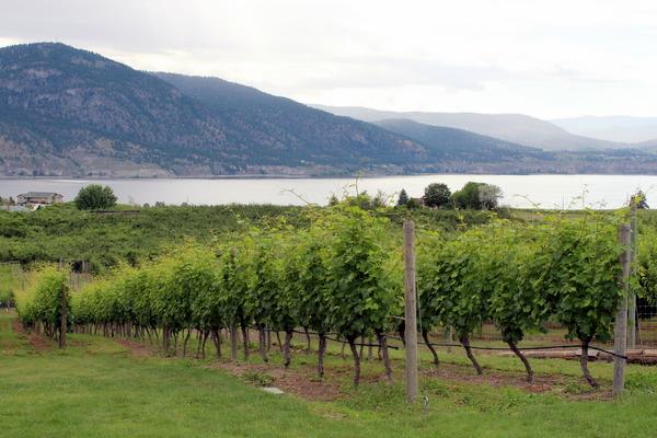 Okanagan Lake Wein Penticton