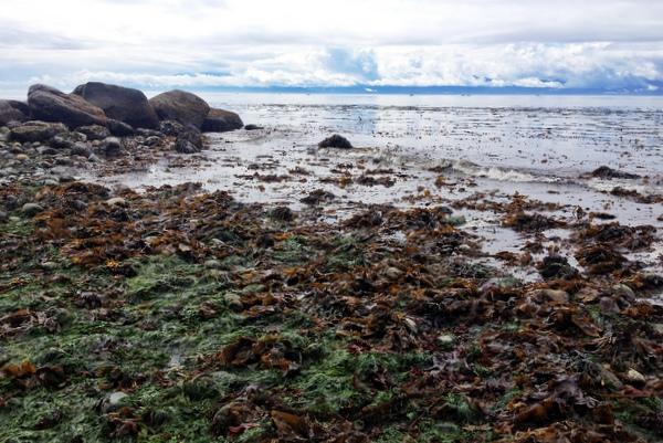 Sooke Vancouver Island Strand