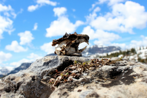 Wandern Rocky Mountains Banff