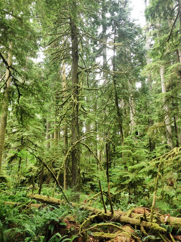 Regenwald Vancouver Island Westküste