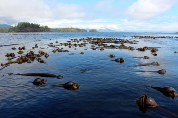 Sea Kayaking Westküste Vancouver Island