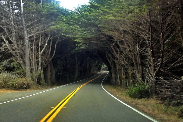 Baumtunnel Highway 1 Mendocino Kalifornien