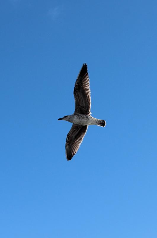 Seevogel Möwe Atlantik Irland
