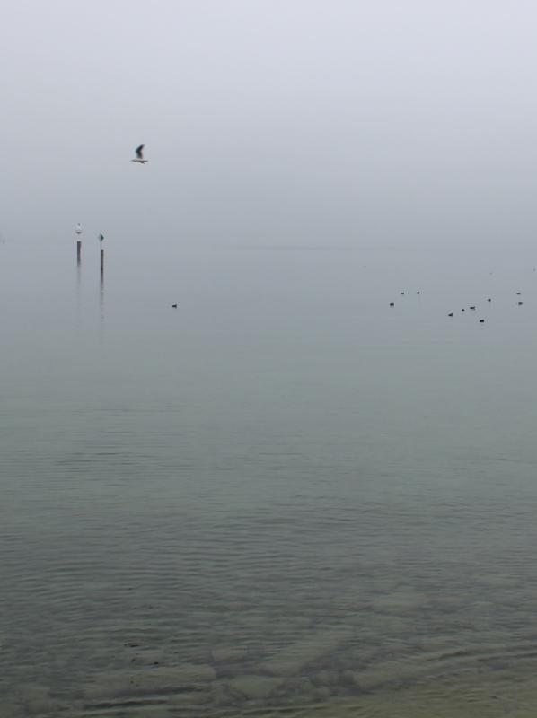 Bodensee Nebel grau