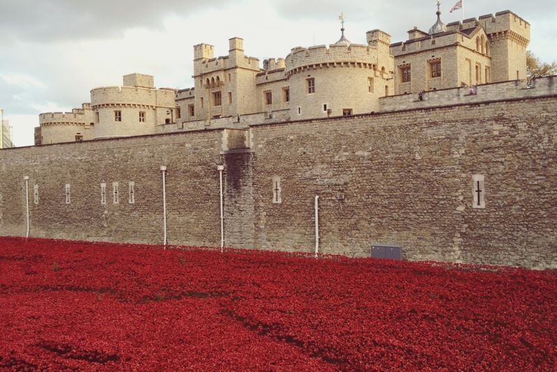 Tower Poppies London