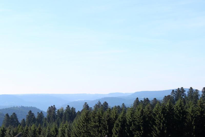 Schwarzwald Blick Baumwipfel Bauernhof