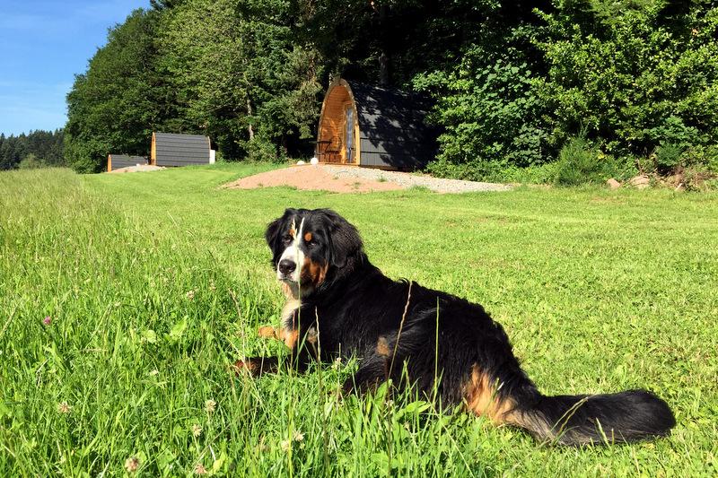 Urlaub auf dem Bauernhof Schwarzwald