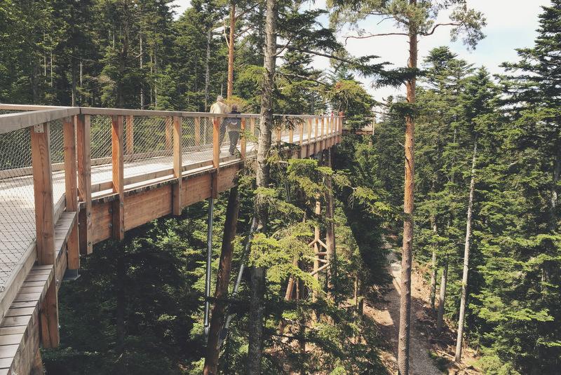 Sommer-Abenteuer: Schwarzwald