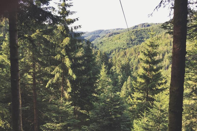 Hirschgrund Zipline Schwarzwald Ausflugstipp