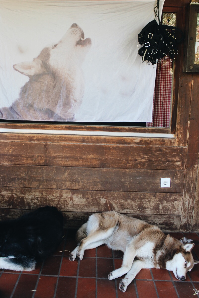 Husky Ranch Angerberg Österreich