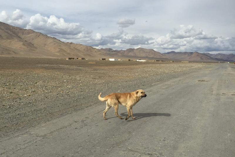 Streunender Hund Pamir Highway Alichur