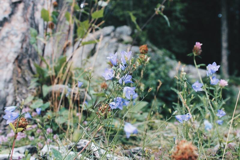 Blumen Rundwanderweg Eibsee Bayern