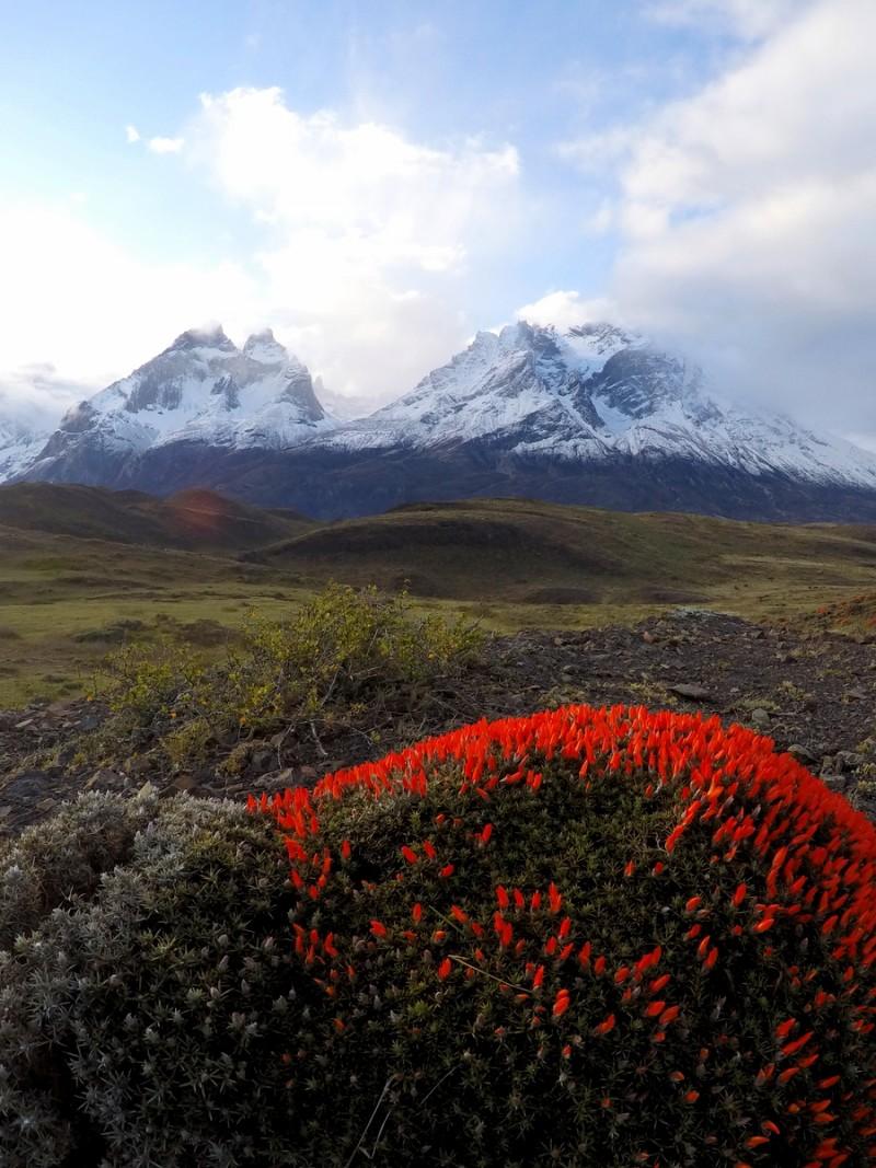 Landschaft Frühling Torres del Paine Chile Patagonien