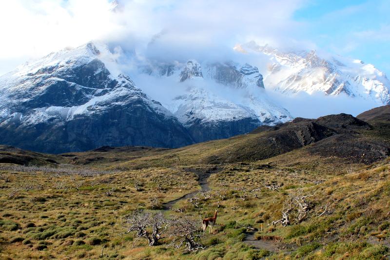Torres del Paine Berge Landschaft Guanaco