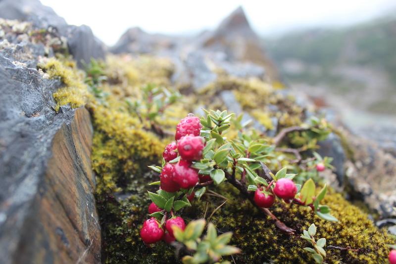 Torres del Paine Patagonien Frühling Vegetation