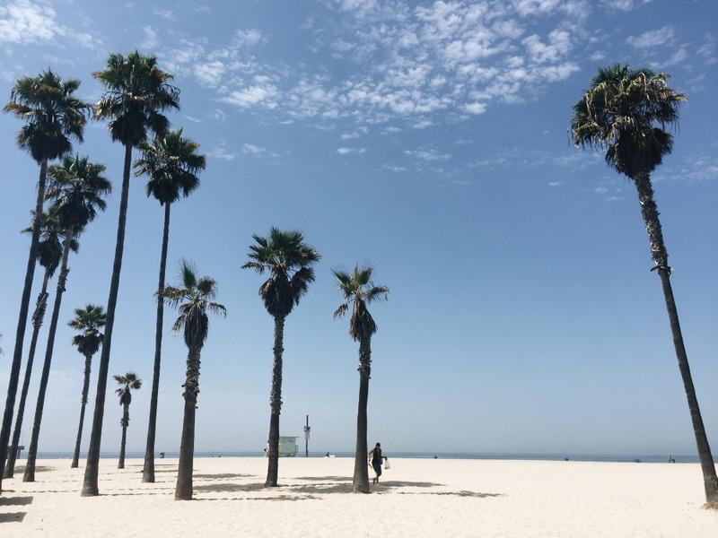 Venice Beach Los Angeles PalmenVenice Beach Los Angeles Palmen