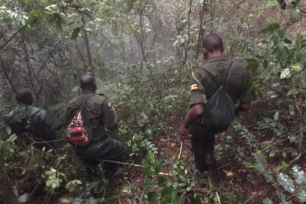 Gorilla Tracking Uganda Ranger Bwindi Wald