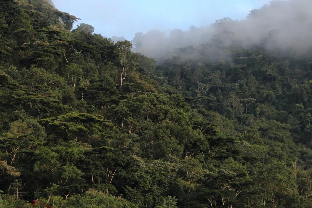 Bwindi Impenetrable Forest Uganda Buhoma