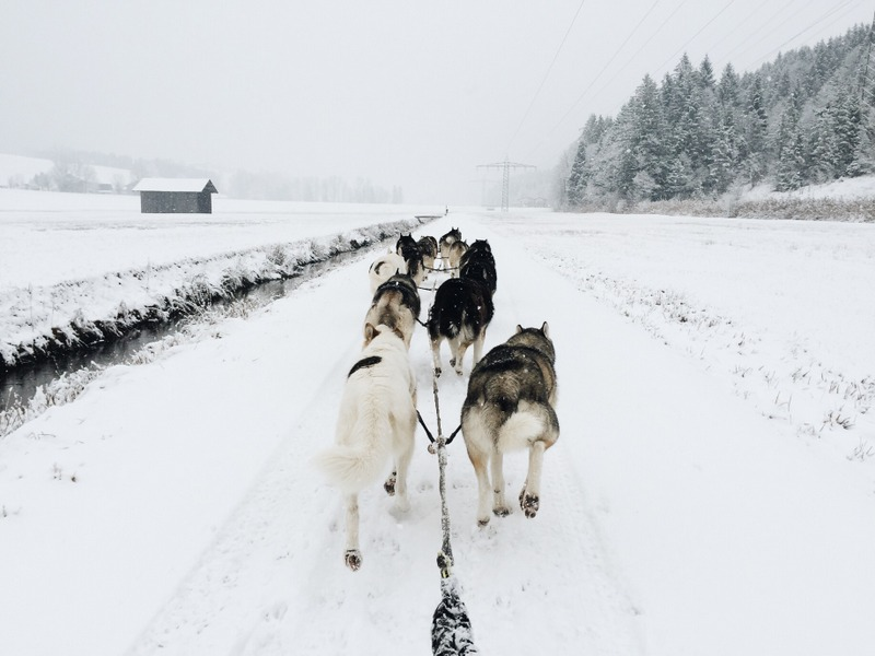 Hundeschlittenfahren Tirol Oesterreich Winterurlaub