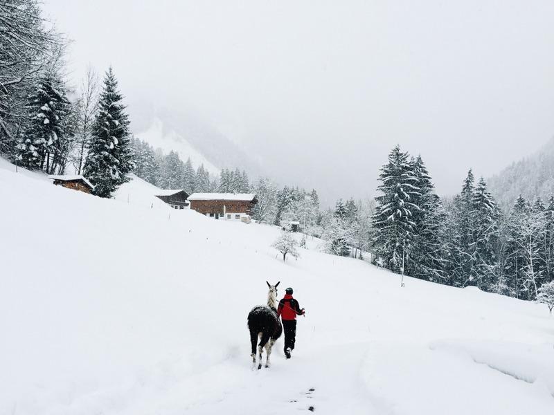 Abenteuer Lama Trekking Tirol Oesterreich
