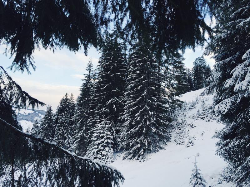 Winterwald Tirol Schneeschuhwanderung