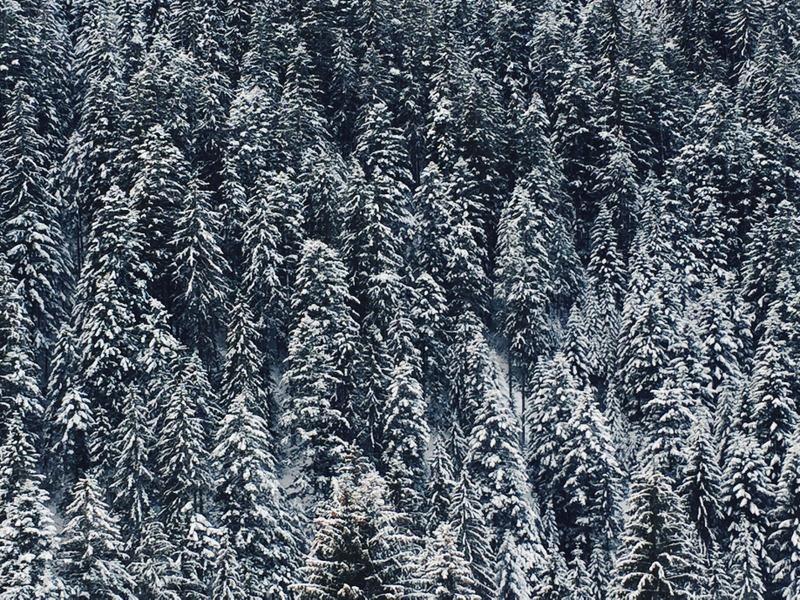 verschneiter Winter Wald Tirol