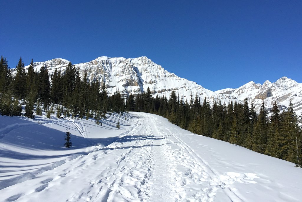 Weg zum Peyto Lake Aussichtspunkt Kanada Rockies Winter