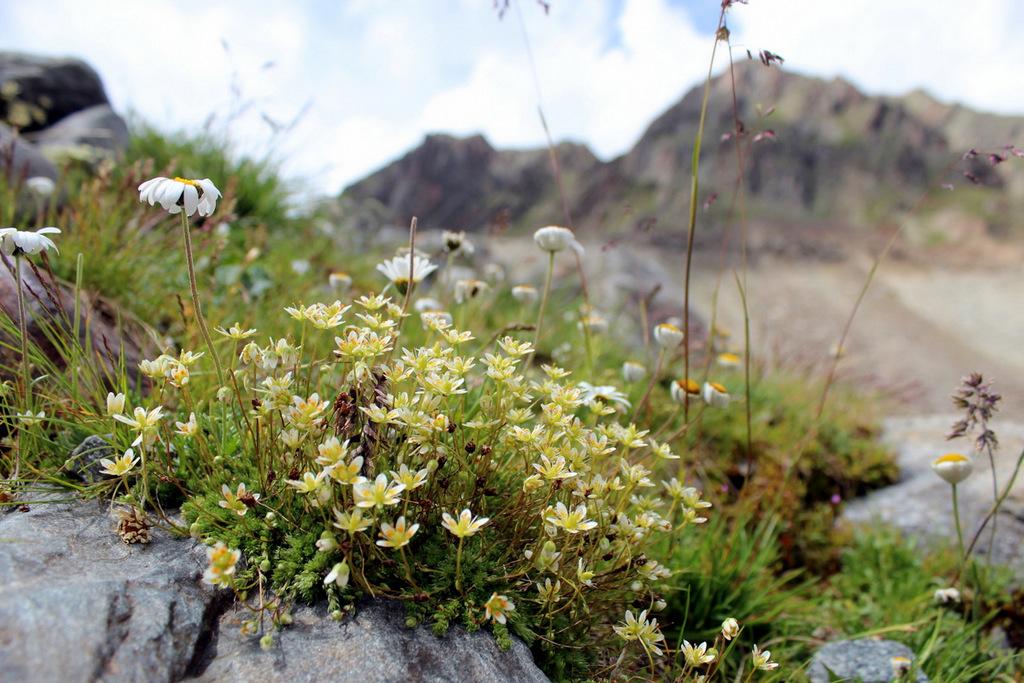 Bergblumen wandern Stubai Tirol