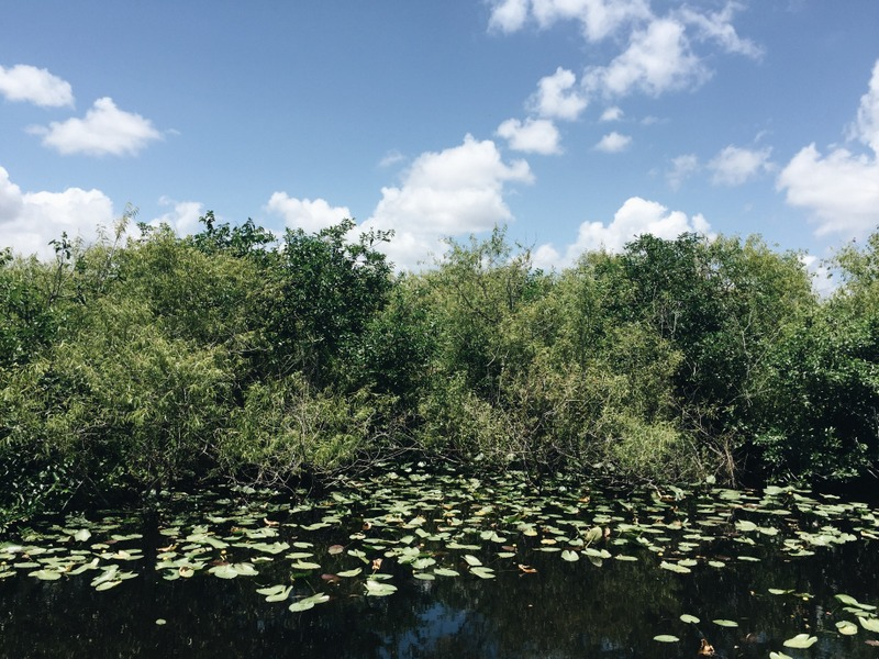 Everglades Florida Shark Valley