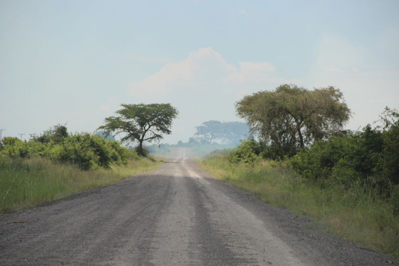 Uganda Savanne