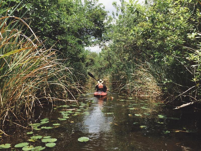 Kajaktour Everglades paddeln