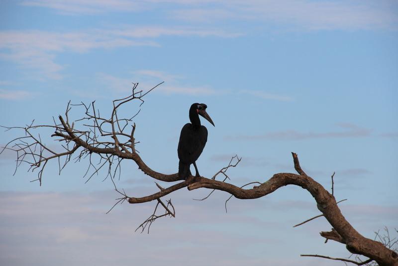 Marabu Safari Uganda