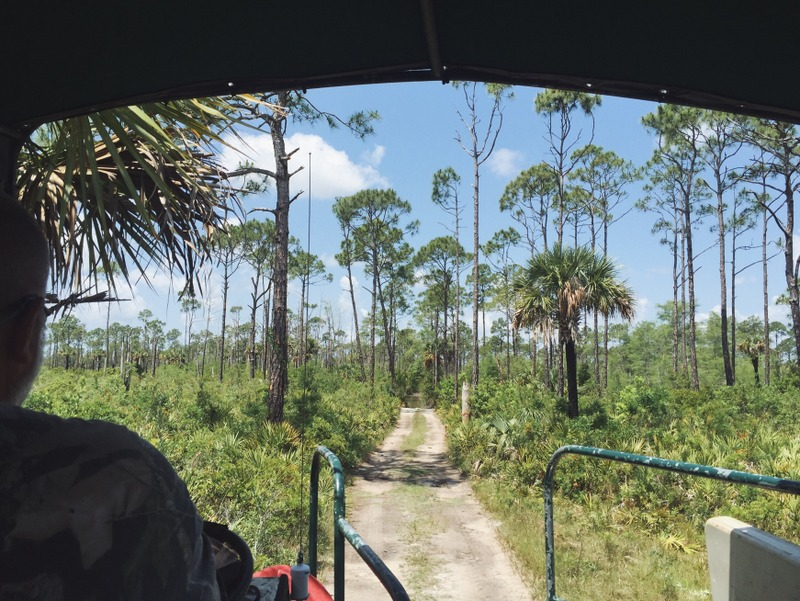 Sumpf Buggy Tour Everglades