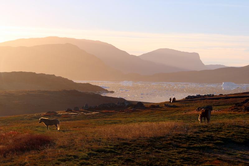 sonnenuntergang-islandpferde-groenland