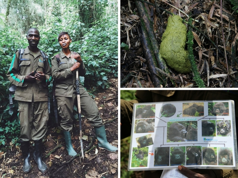 gorilla-trekking-ruanda-abenteuerreise