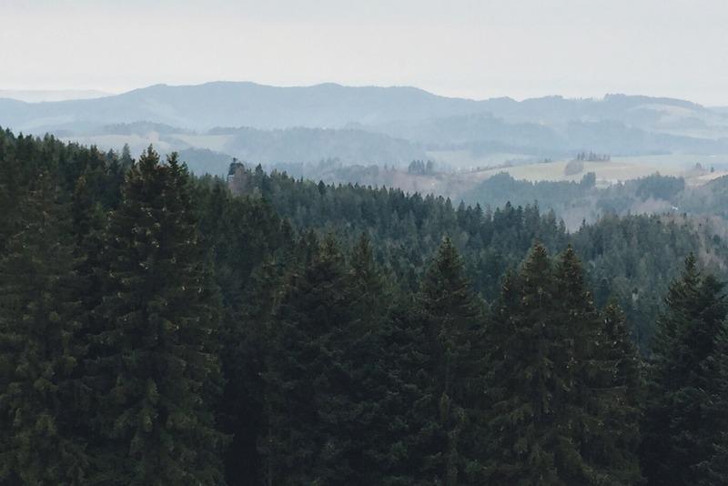 Baeume Schwarzwald Hochschwarzwald