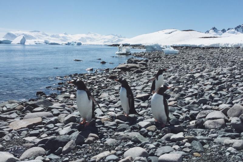 Eselspinguine Antarktis Cuverville Island Strand