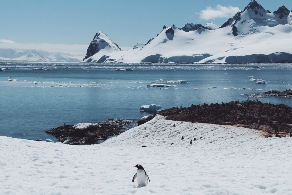 Antarktis Cuverville Island schoenste Ausfluege