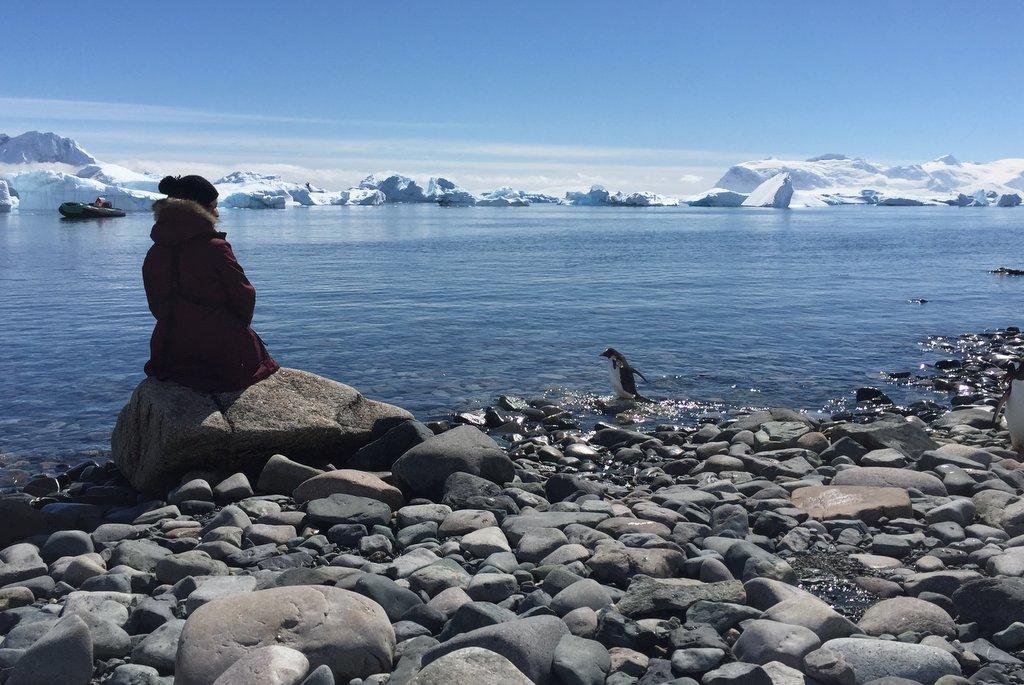 Antarktis Cuverville Island Pinguine Strand