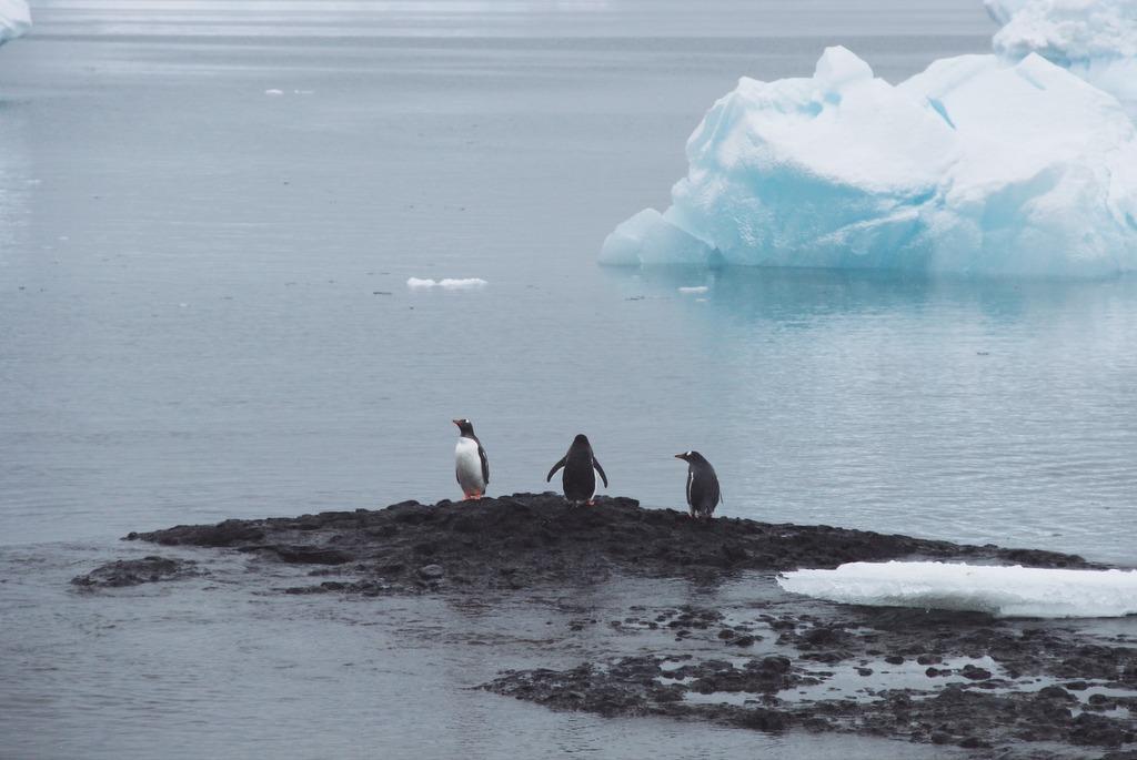 Antarktis Eselspinguine