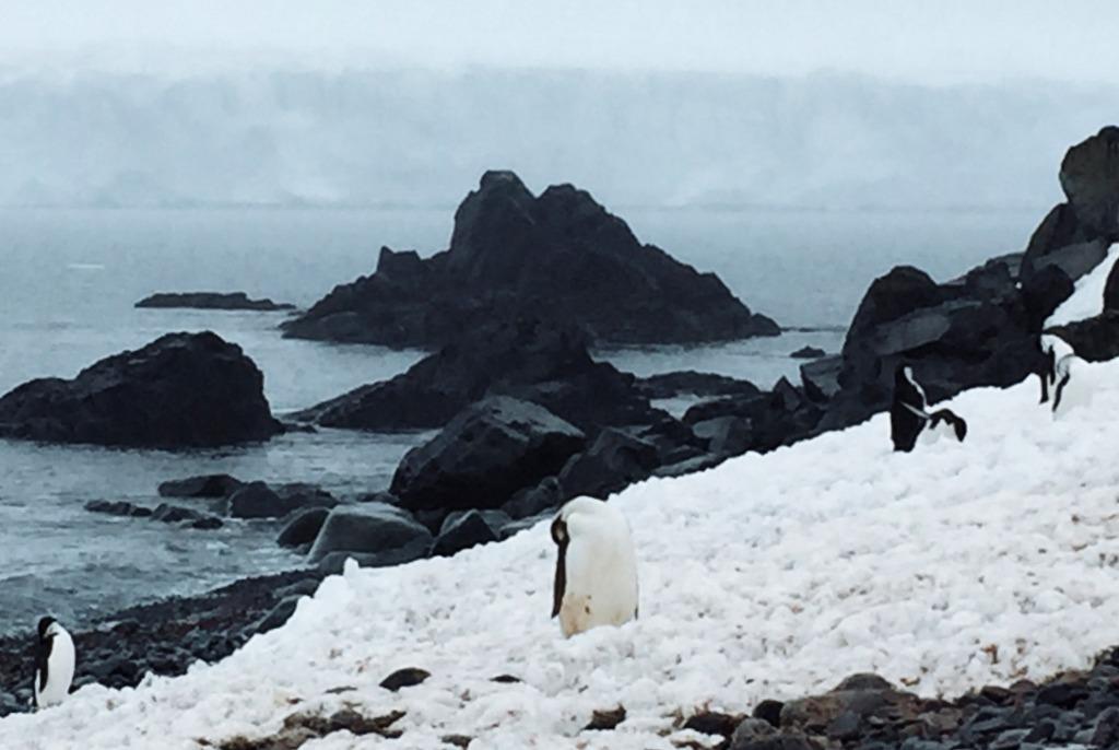 Antarktis Kaiserpinguin