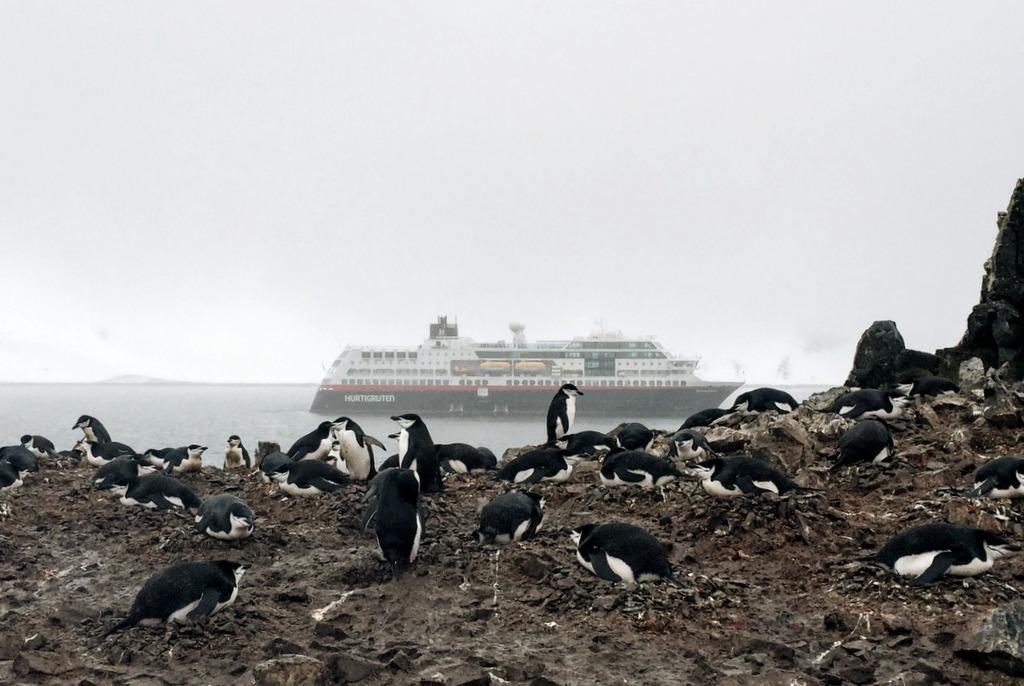 Antarktis Kreuzfahrt Pinguinkolonie Anlandung