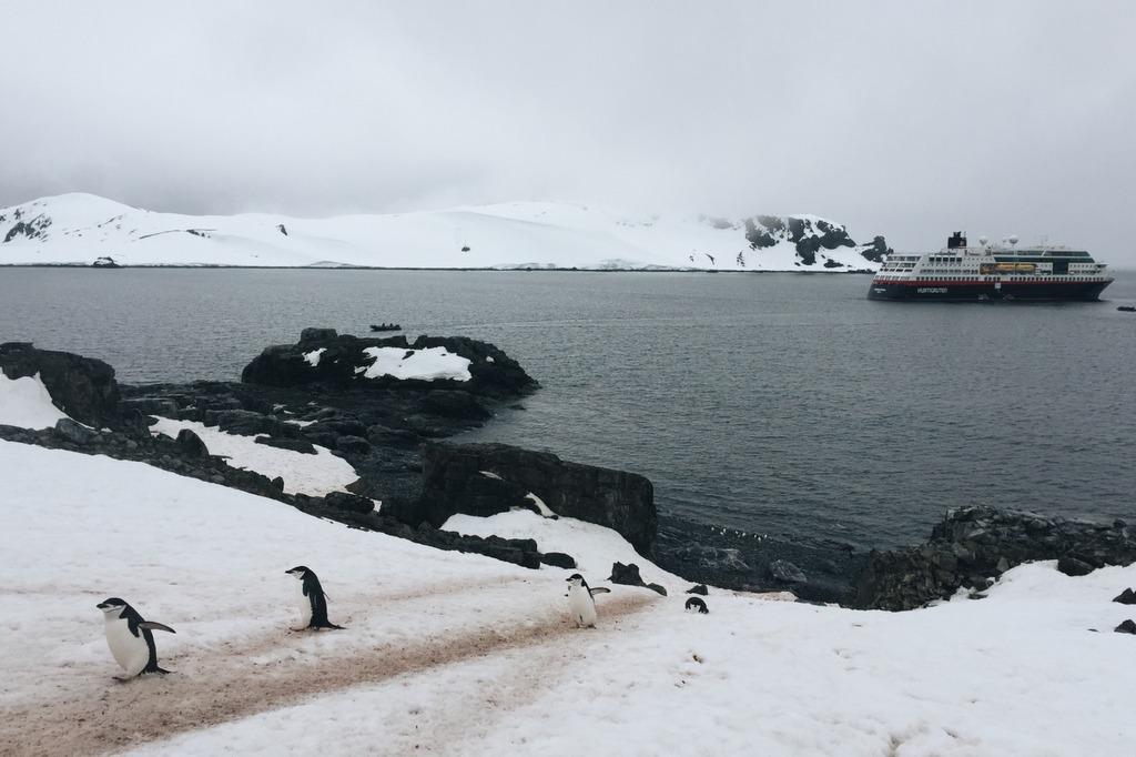 Antarktis Pinguin Highway
